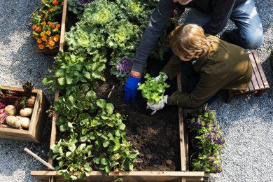 Hortas e vegetais